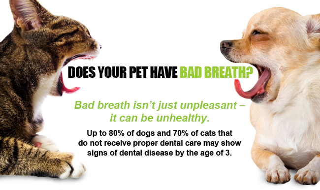 Bad Breath Cats And Dogs